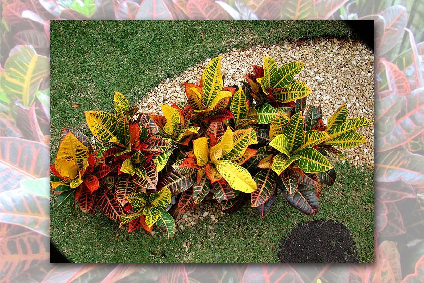 flores tropicais jardim : flores tropicais jardim:DICA 02 – ESPÉCIES IDEAIS NA DECORAÇÃO PARA JARDIM DE INVERNO